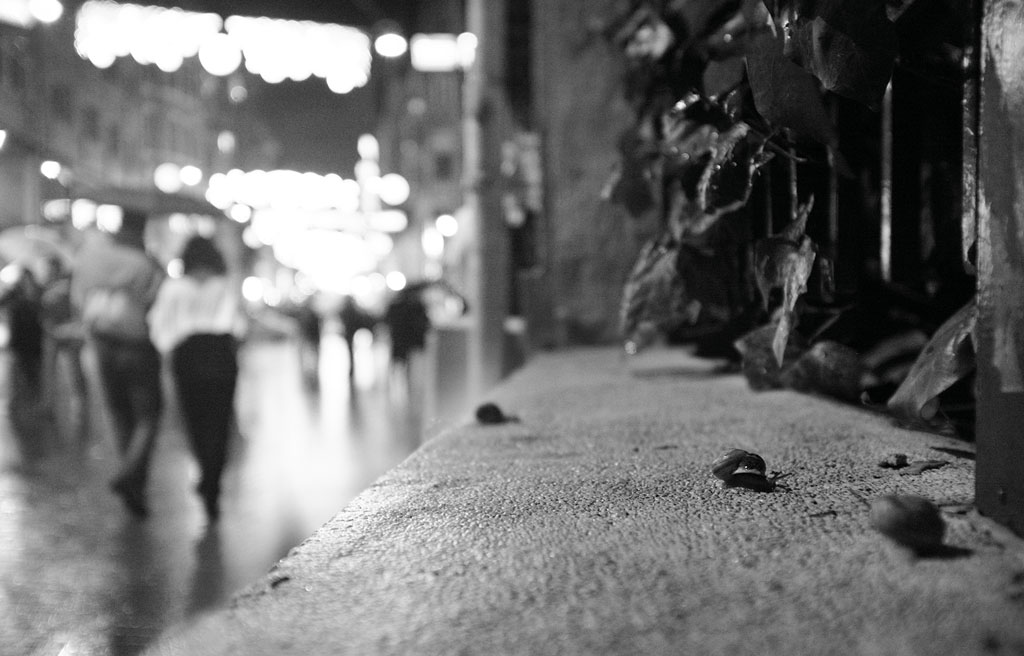 Snails on a rainy night