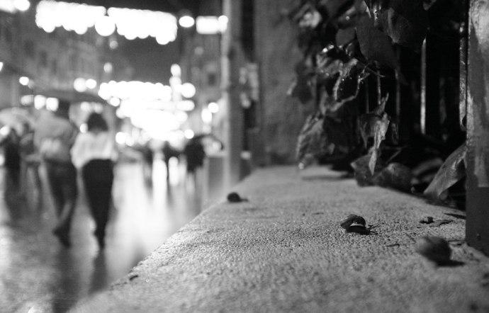 Snails on a rainy night