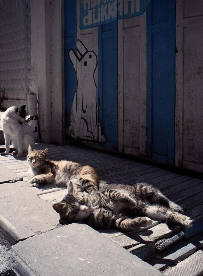Istanbul - Cats in the sun