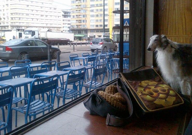 Café Belga - mysterious dog