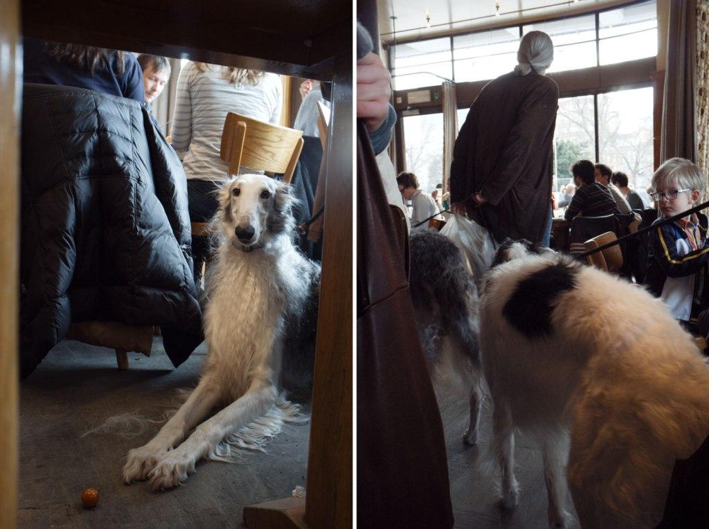 Café Belga03,7 - borzoiK64 - diptych