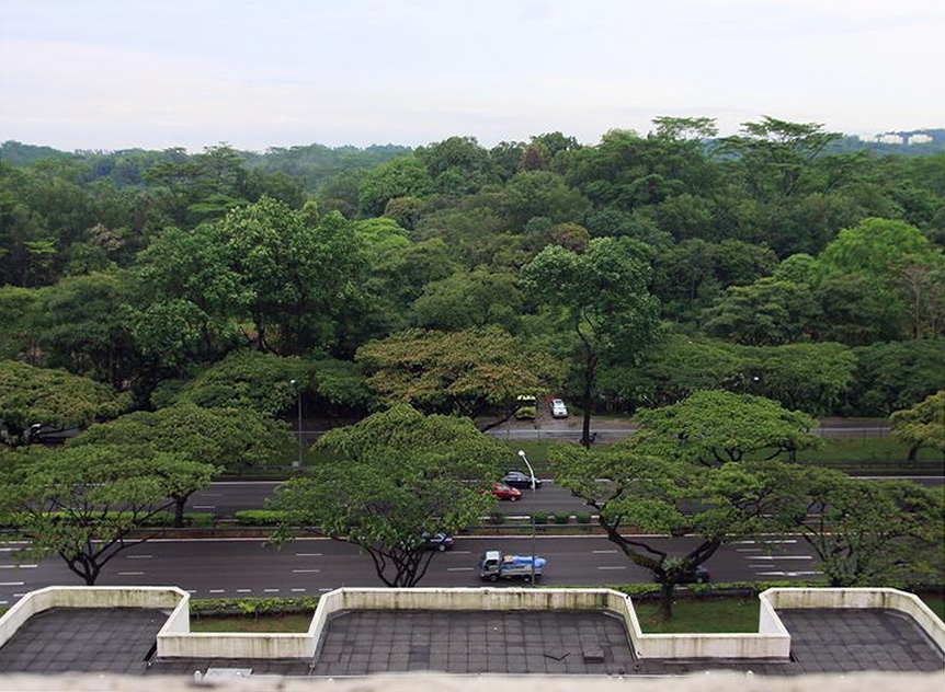 Forested area in Jurong (taken on 15 Mar)c