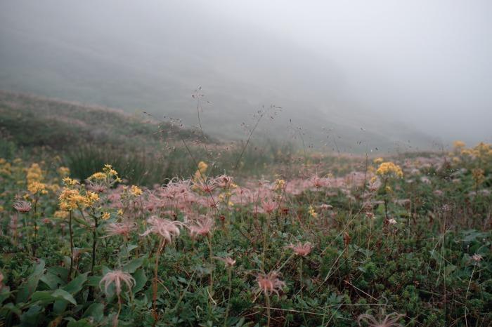 Daisetsuzan National Park 大雪山国立公園 - Asahi-dake 旭岳39V50