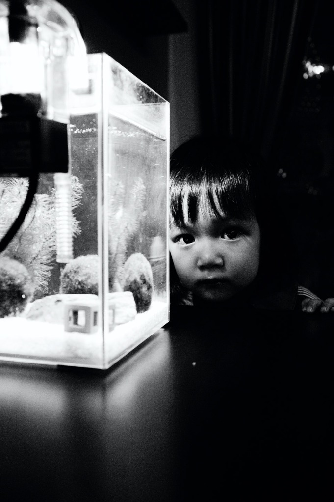 Fish & prawn01a25bwb