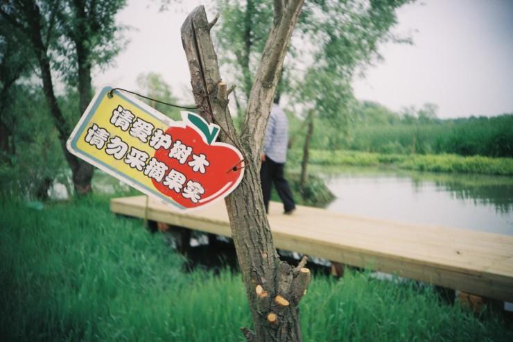 Xixi Wetlands5 - Fuji Sensia 200