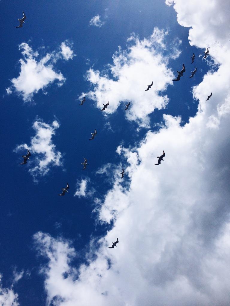 Istanbul seagulls