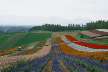 Shikisai-no-Oka flower garden