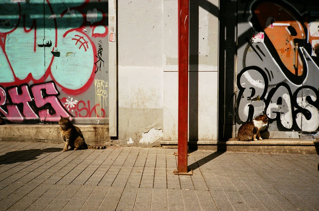 Cats roam freely in the streets of Istanbul. Some people say that Istanbul did not suffer too badly from the Black Plague because of the city's many cats which helped control the rat population.