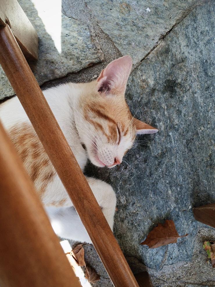 Cat taking a siesta