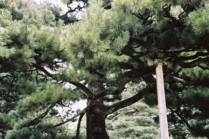 Kenroku-en Garden - shot with Canonet QL17 with Portra 160